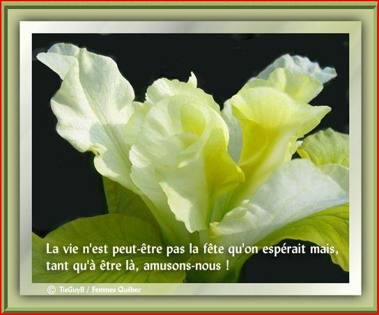 la-vie3-jpg.jpg
